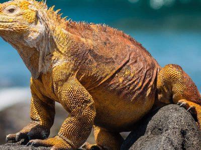 Wild Galapagos & Peru Escape 1